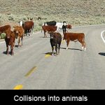 Who is responsible for collisions into animals on the road?