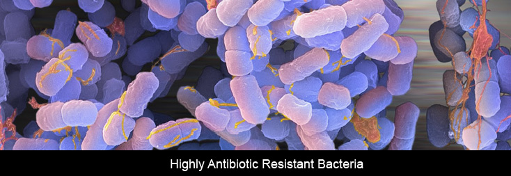 Highly-Antibiotic-Resistant-Bacteria