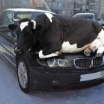 Avoid crashing into animals on our roads!