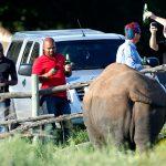 Rhino poaching update
