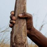 Panel of experts invites stakeholder participation as it explores rhino horn trade feasibility