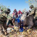Isuzu partners with Nkombe to save the Rhino