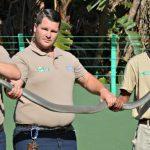 South Coast herpetologist gives lifesaving insights into the Black Mamba
