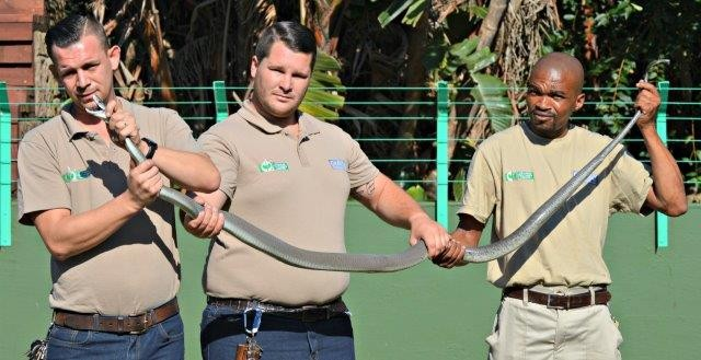 South Coast herpetologist gives lifesaving insights into the Black Mamba