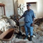 Donkey skins valued at R2.25m discovered at smallholding in the Brandvlei area, Randfontein.