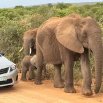 Is Roadkill the elephant in the Room?