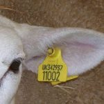 "Farmers warned by SAPS of scam by ""Fake officers""claiming to have found stolen livestock"