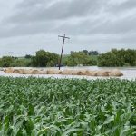 Rain in Free State: Farmers grateful, but floods cause damage